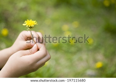 The Hands Of A Child And Dandelion - stock photo
