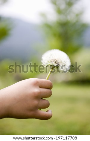 The Hands Of A Child And Fluff - stock photo