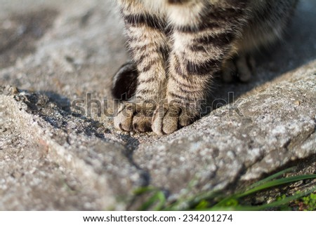 The hands of the cat - stock photo