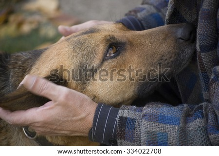 The hands of the man who pats a dog - stock photo