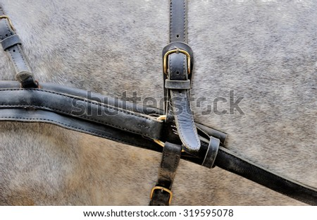 The harness on a horse wearing brown - stock photo