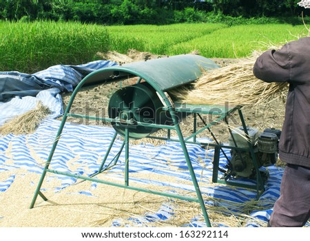 The harvest of farmers in northern Thailand. - stock photo