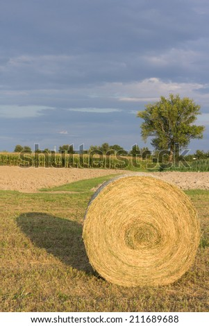 The harvest of hay to get to the milk production  - stock photo