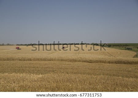 The harvesters work in the field of wheat/rye in Ukraine.