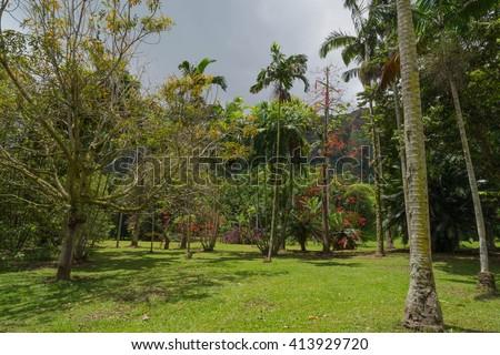 The Hawaiian rain forest of Hoomaluhia botanical gardens in Kaneohe Hawaii on the tropical island paradise of Oahu, Hawaii, USA provides a nature hiking trail for pleasure and enjoyment. - stock photo
