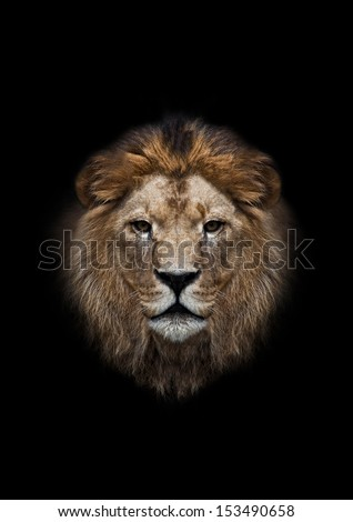 The head of a lion on a black background