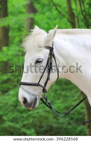 The head of a white horse - stock photo