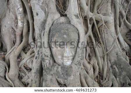 The head of Buddha cover by tree root at historical park, Ayutthaya, Thailand