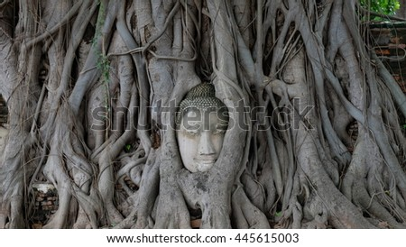 The head of buddha in the tree.