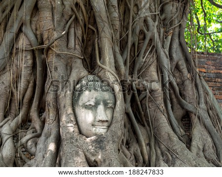 the head of buddha statue in tree roots