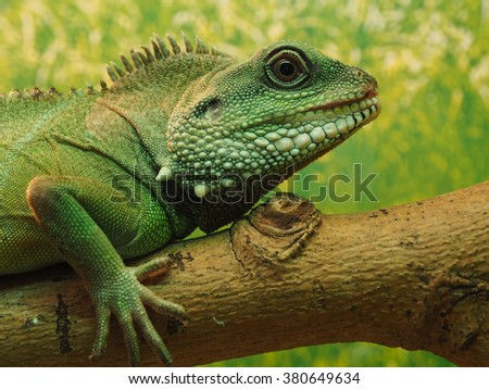 The head of green lizard on a tree.