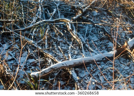 The heap of black dry logs lying under the first snow. Sunny but cold winter morning near Lviv, Ukraine.  - stock photo