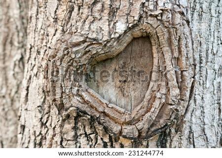The heart shape bark of tree. - stock photo