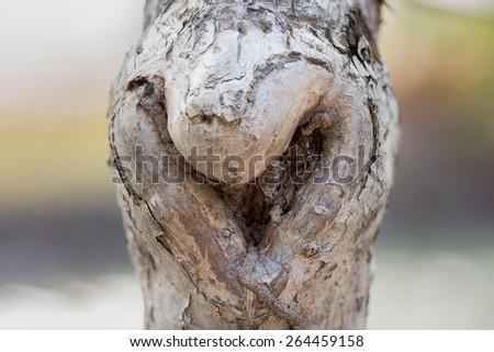 The heart shape bark of tree (soft focused) - stock photo