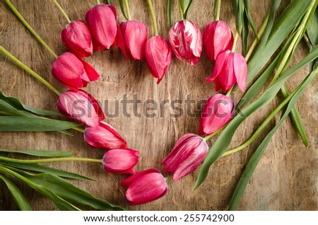 The heart-shaped frame of fresh tulips is laying on an old rustic wooden background  - stock photo