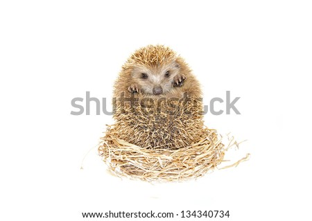 The hedgehog - stock photo