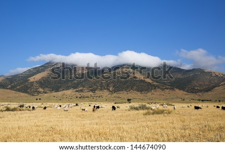 the herd of goats and cloudy mountains