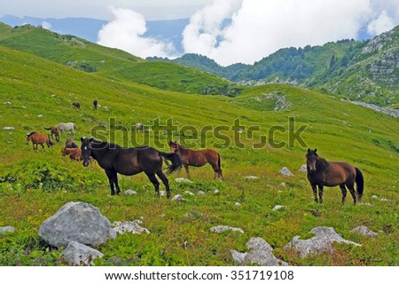 The herd of horses grazing in the mountains in the afternoon - stock photo