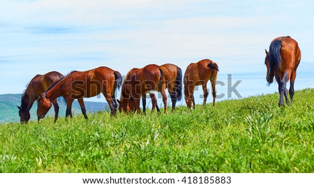 The herd of horses is grazed on a meadow