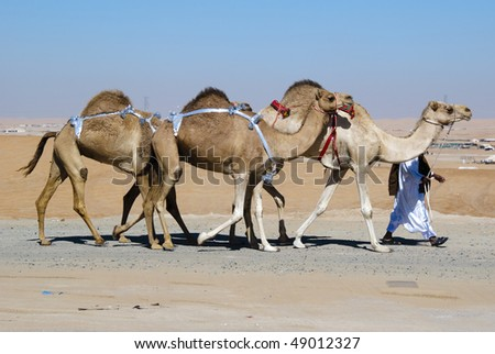 The herdsman leads a small caravan against the desert backdrop - stock photo