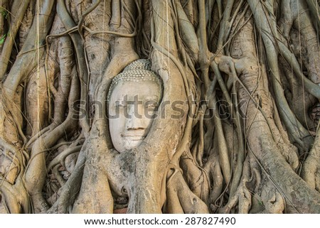 The highlight Buddha's head in tree at Thailand for tourism