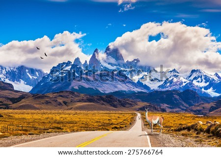The highway crosses  Patagonia and leads to snow-capped peaks of Mount Fitzroy. On the side of road is graceful guanaco - stock photo
