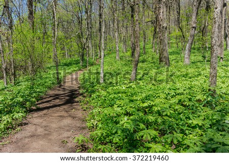 The hike up to Springer Mountain is flush with green undergrowth - stock photo