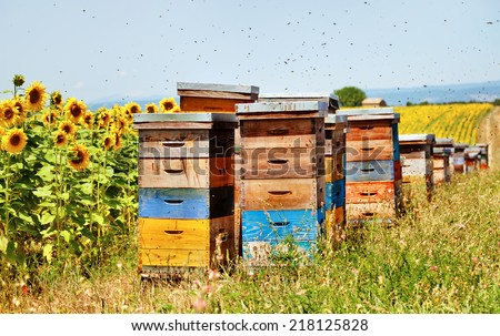 The hives on the sunflower field, Florence, France - stock photo