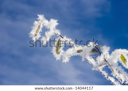 The hoarfrost on the twig with blue sky