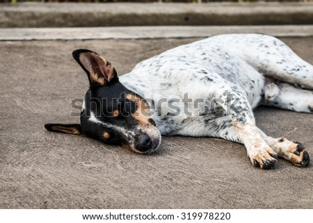 The homeless dog sleeping on cement floor, Selective focus - stock photo