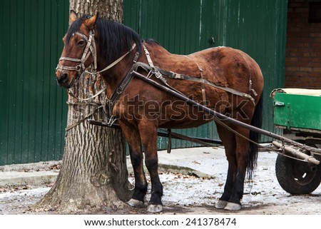 The horse - stock photo