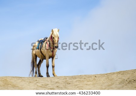 The horse at Mount Bromo volcano, the magnificent view of Mt. Bromo located in Bromo Tengger Semeru National Park, East Java, Indonesia. Copy Space Area. - stock photo