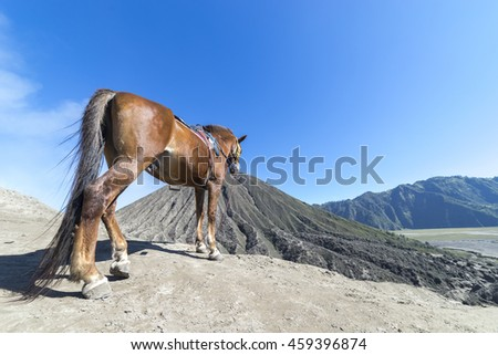 The horse at Mount Bromo volcano, the magnificent view of Mt. Bromo located in Bromo Tengger Semeru National Park, East Java, Indonesia. - stock photo