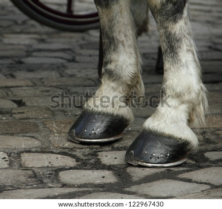 The horse hooves on a block pavement in the old city of Vienna, Austria, Central Europe - stock photo