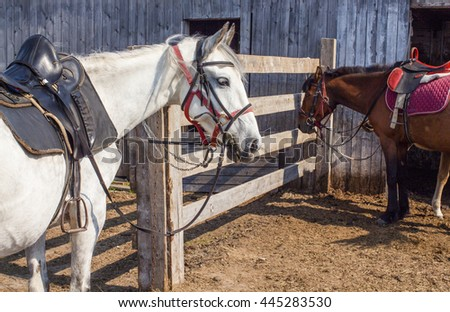 The horse in the stall, ranch, beautiful horses, sun and shadow - stock photo