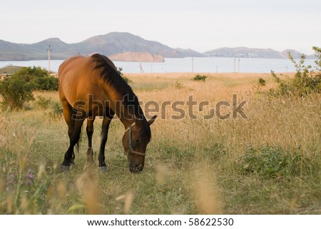 The horse is grazed on a meadow