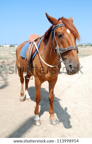 The horse on the background of the village - stock photo