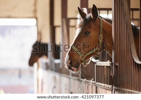 Horse Stall Stock Images Royalty Free Images Amp Vectors