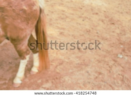 The horse poses for a hoof shot blur background. - stock photo
