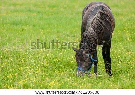 the horse sits on a summer meadow