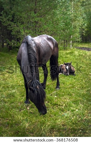 the horse with a little foal is grazed on a meadow - stock photo
