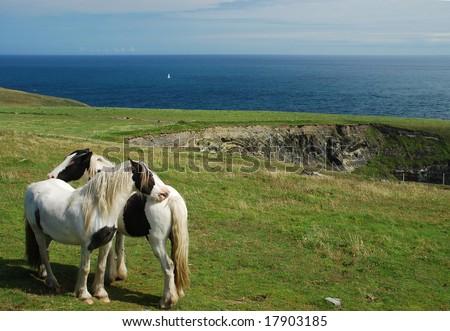 The horses - stock photo