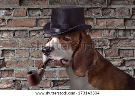 The hound in  cap is very similar on a detective - stock photo