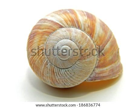 The house of an edible escargot.  - stock photo