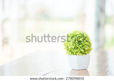 The houseplant - stock photo