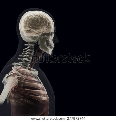The human body (organs) by X-rays on black background. High resolution.  - stock photo