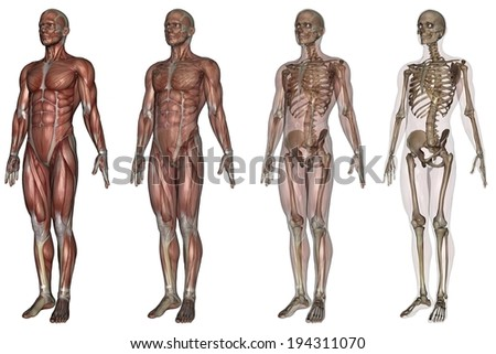 The human body showing body parts at different stages. - stock photo