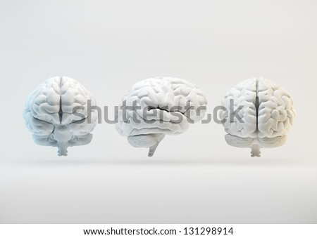 The human brain from different angles - stock photo