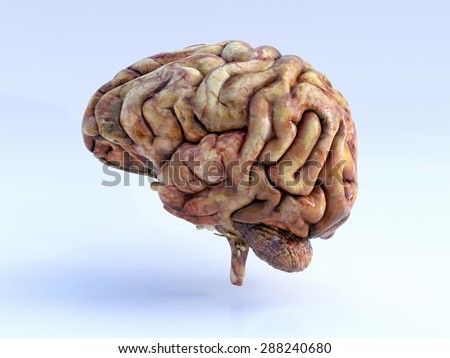 The Human Brain. Left View. Physical 3D Render. - stock photo