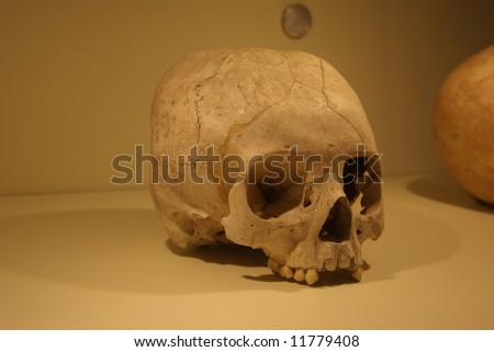 The human scull
